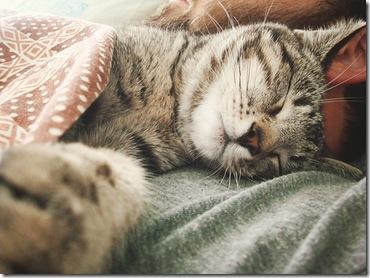 kedi bile uyuyor, benim neyim eksik