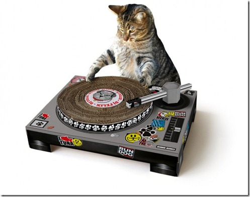 cat scratch-dj cat
