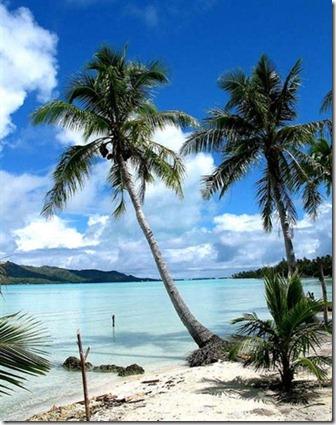 bora bora adası palmiyeleri