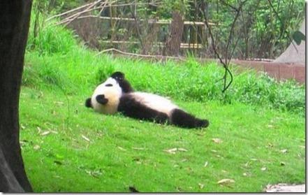 Introspective-Panda-634x400